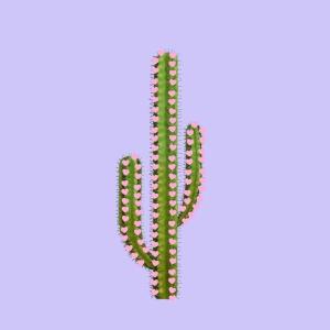 4. cactus del amor